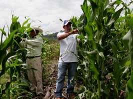 Honduras: Government will invest US $ 55 million loan from the World Bank to strengthen the agri-food and agro-industrial sector