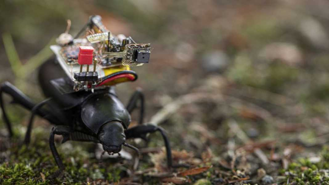 Engineering team placed small cameras on beetles - that's what they saw