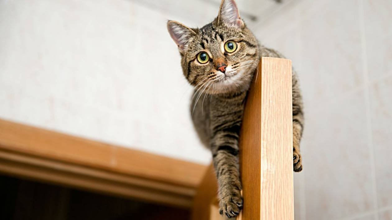 Why do cats usually sleep in the highest places in the house?