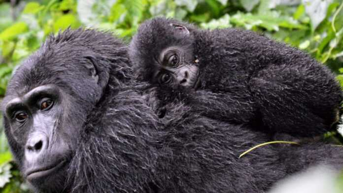 special Species that may soon become extinct from our planet
