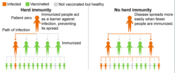 Herd Immunity Vs Without Herd Immunity