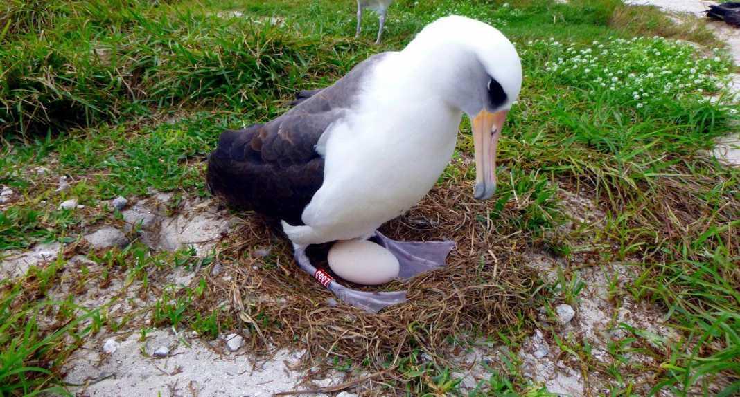 il vecchio uccello selvatico registrato appena figlio v3 503718.jpg