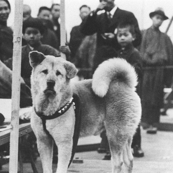 The story of Hachiko, the faithful dog