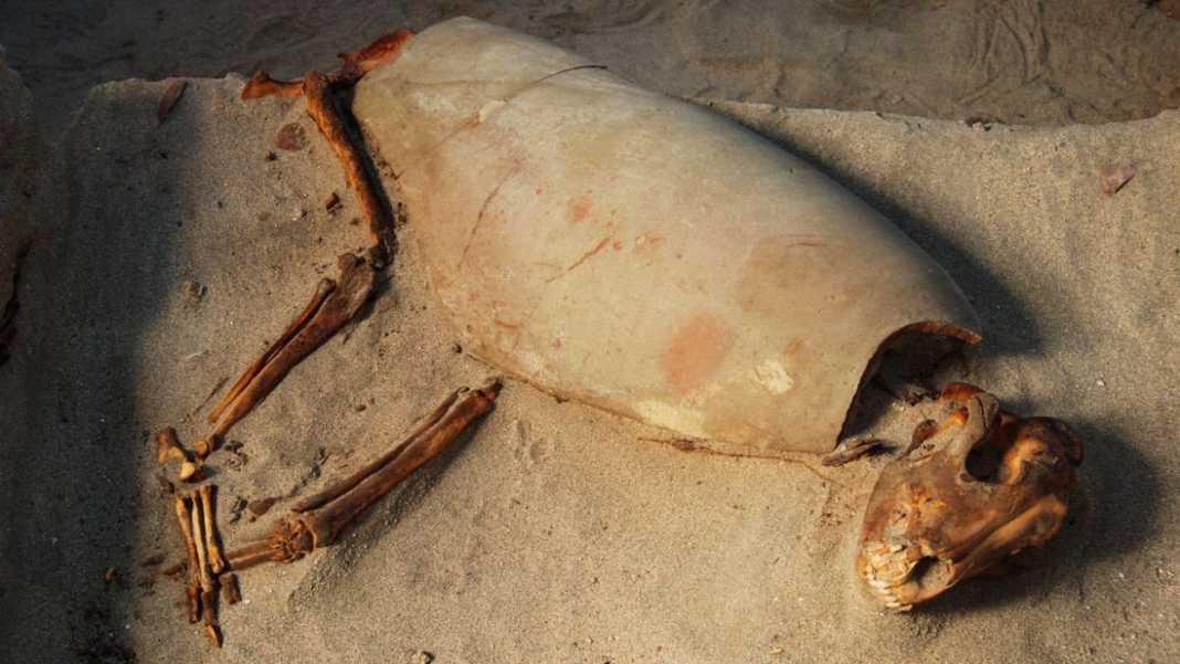in egitto antico cimitero romano ospitava 600 cani gatti v3 502709.jpg